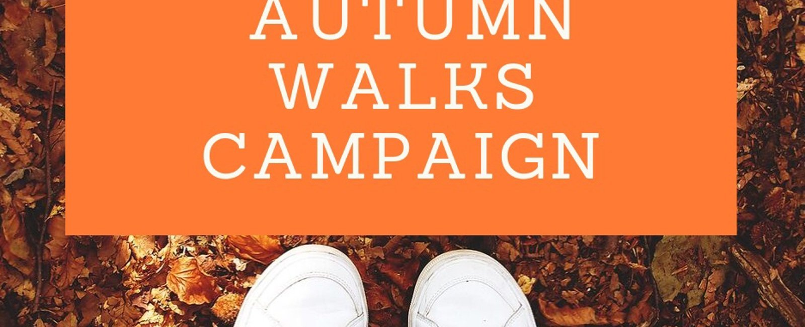 Our Autumn Walks Campaign